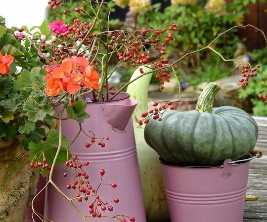 flower-1729397_960_720