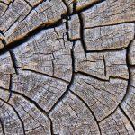 droogmaterialen en exoten